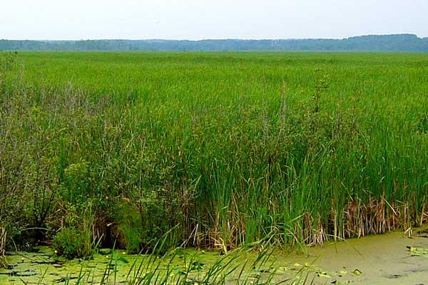 wye-marsh-reduce